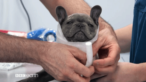 BBC Studios – The Supervet